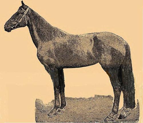 Astrakhan Horse