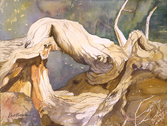 Gnarled Cedar