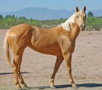 KL Terace Horse