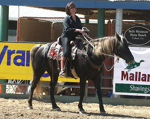 Kentucky Mountain Saddle Horse
