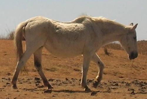 Kundudo Horse