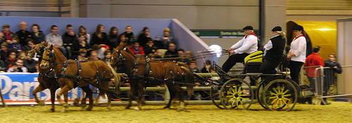 Landais Pony