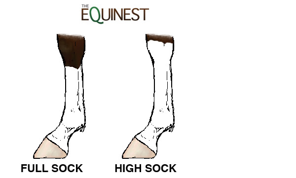 Horse Leg Markings