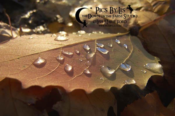 Fairy Ring Raindrops