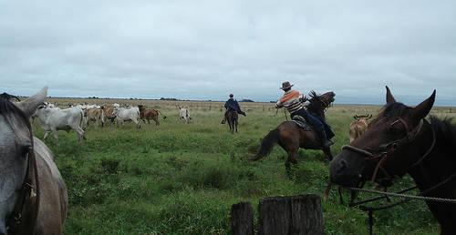 Llanero Horse