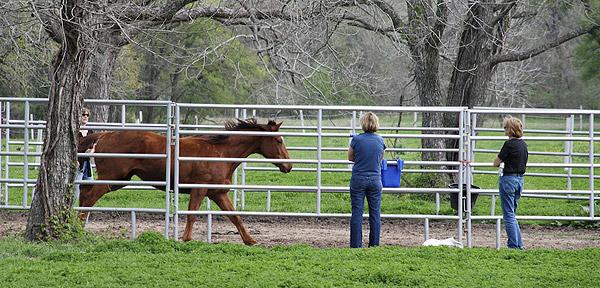 Horse in Roundpen