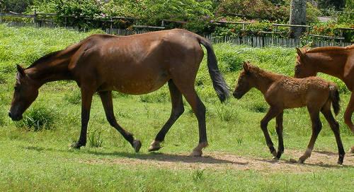 Marajoara Horse