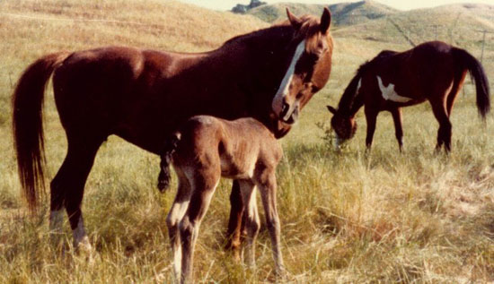 Mare Foaling Signs Pictures