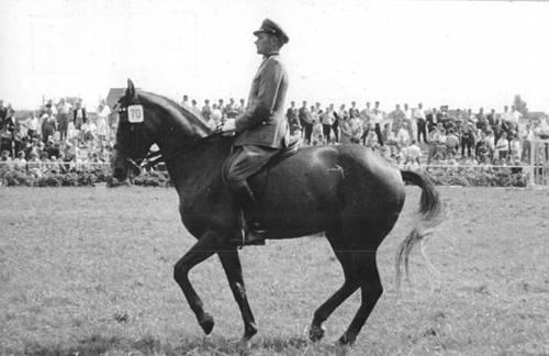 Mecklenburg Horse
