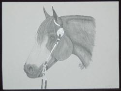 Melissa Boverhof Horse