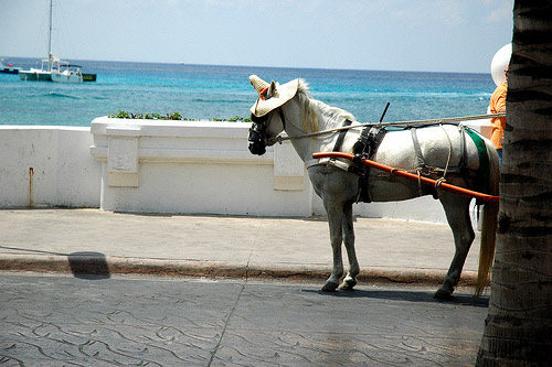 Horse in Mexico