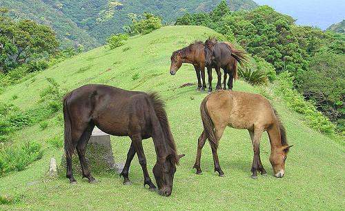 Misaki Pony