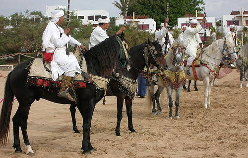 Moroccan Barb Horse