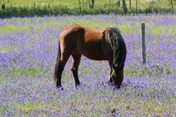 Natural Horse