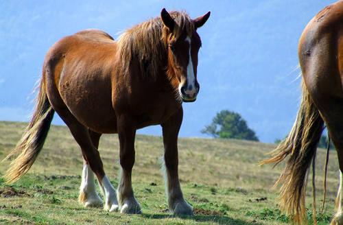 Navarra Horse