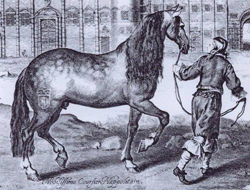 Neapolitan Horse