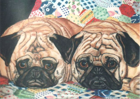 Pugs Comfy on Quilt