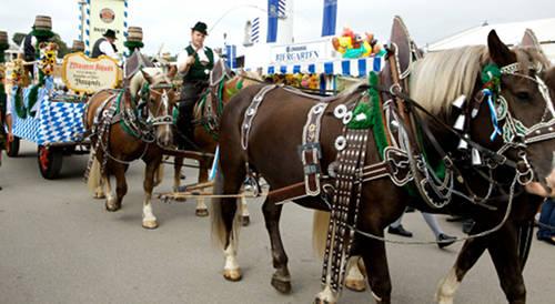 Oberlander Horse