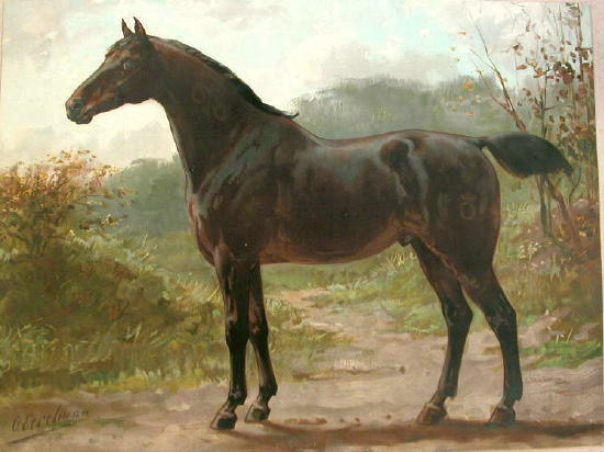 The Horse Breed Art Of Otto Eerelman The Equinest