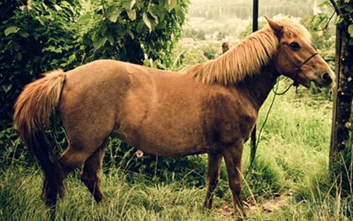 Padang Pony