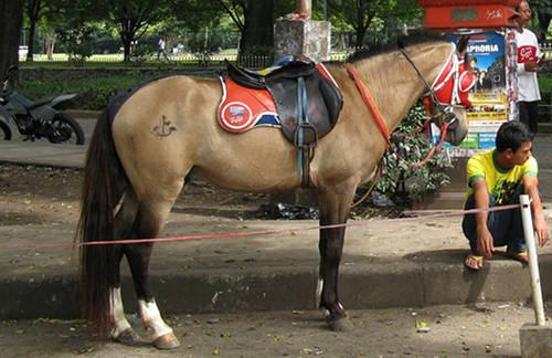 Periangan Pony