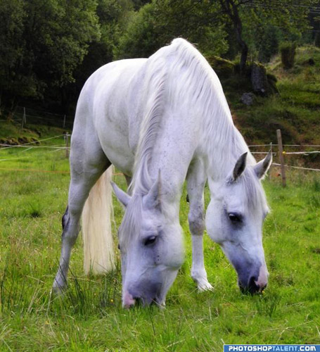 Incredible Photoshop Horses | The Equinest
