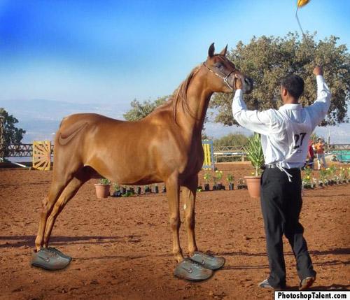 Professional Running Horse Photoshop Image