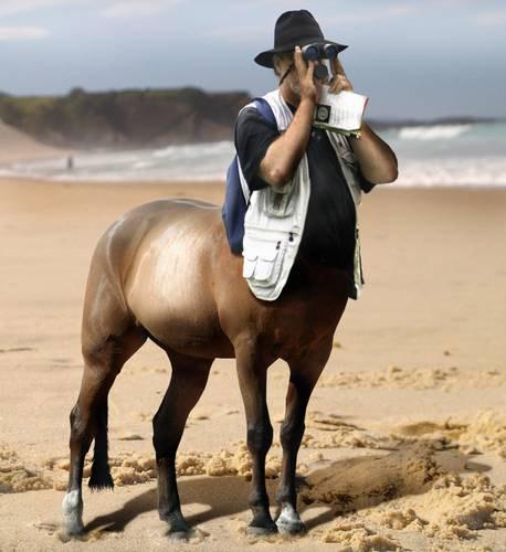 Centaur Photoshop Image