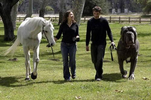 Huge Dog and Horse Photoshop Image