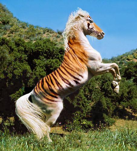 Tiger Horse Photoshop Image