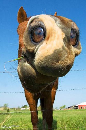 Horse See Photoshop image
