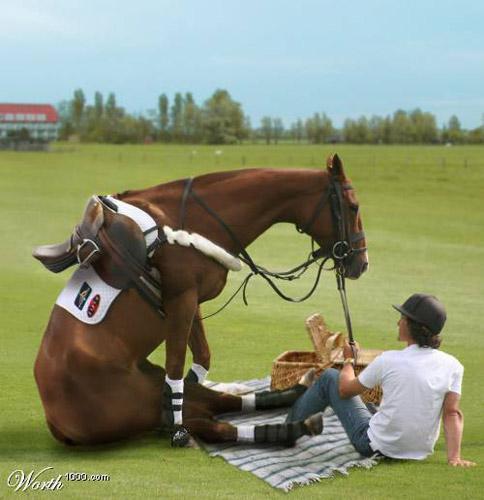 Horse Picnic Photoshop image