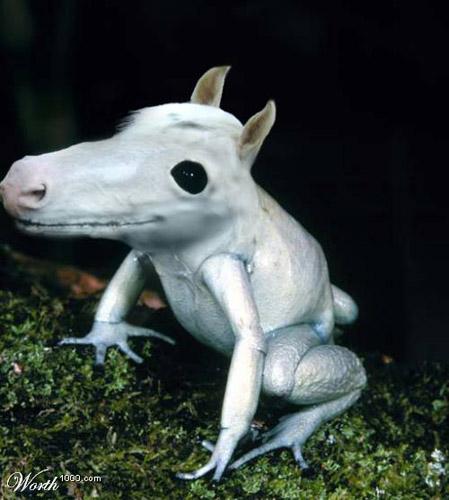 Horse Photoshop image