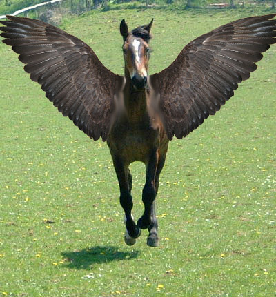 Pegasus Photoshop image