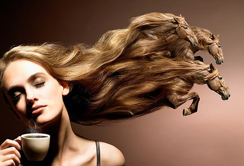 Horse Hair Photoshop image