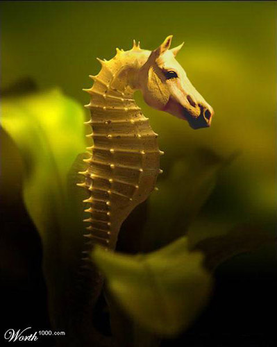 Sea Horse Photoshop image
