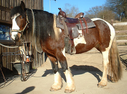 Bay Pinto / Paint Horse