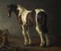 Pinto Horses
