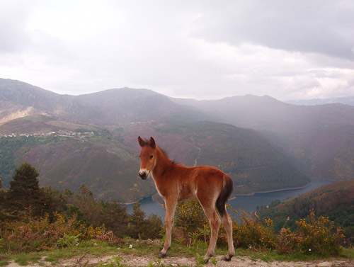 Baby horse in the Portuguese Countryside