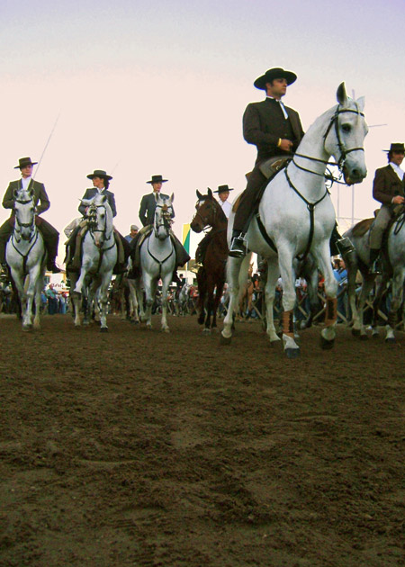 Portugal horses in parade