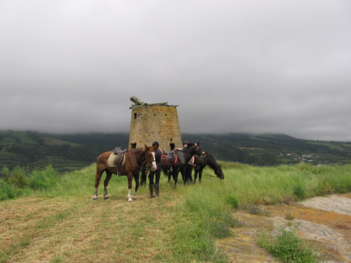 Horses in the Portuguese Countryside in front of ruins