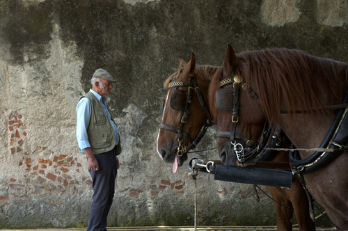 Old man standing with horses