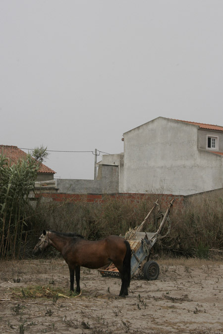 A horse standing outside a house