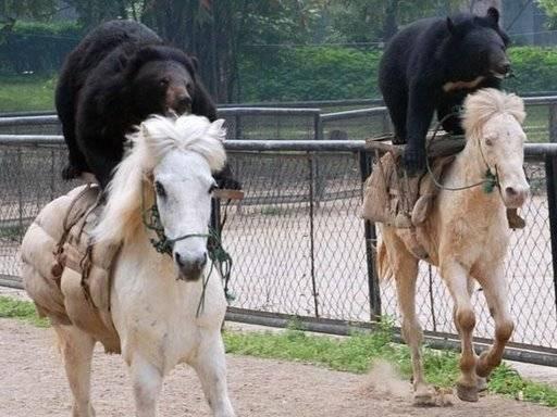 Bear Riding Horse