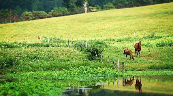 Pretty Pasture