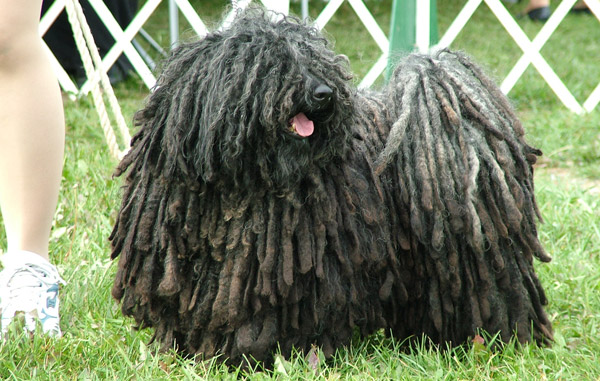 Interesting Facts About Unusual Dog Breeds | The Equinest