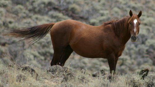 Horse Breed Quiz