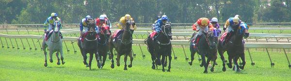 Horse-Racing Terms