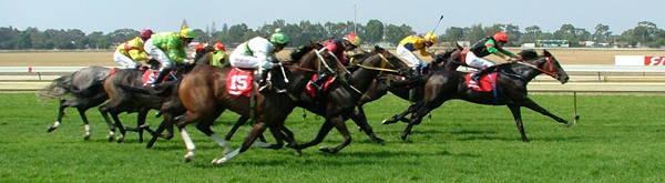 Horse Racing Terminology