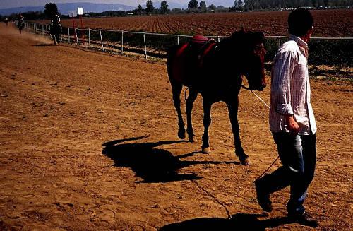 Rahvan Horse